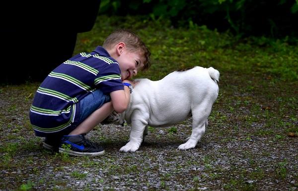 czy można wyperswadować dziecku własne zwierzątko