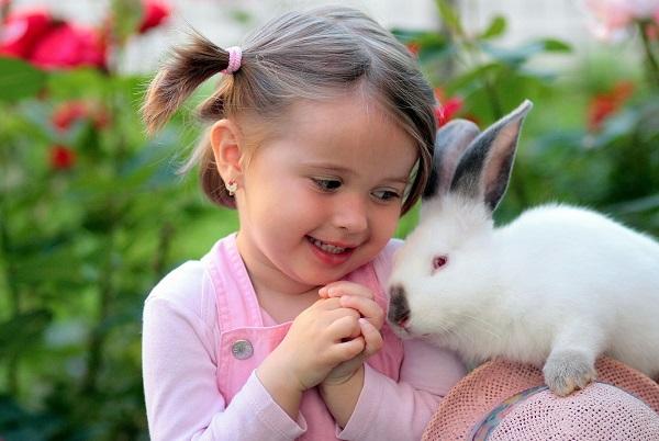 króliki to nie tylko zwierzęta hodowlane