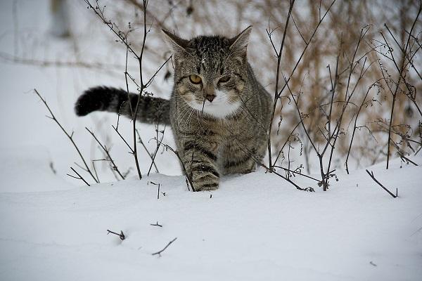 uciekający-kot