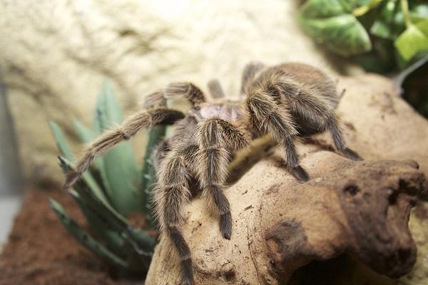 czy-pająk-w-domu-to-dobry-pomysł